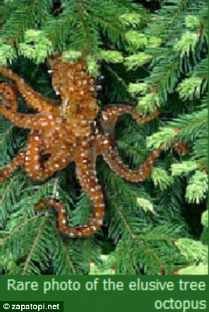 "Save the ""endangered tree octopus"""
