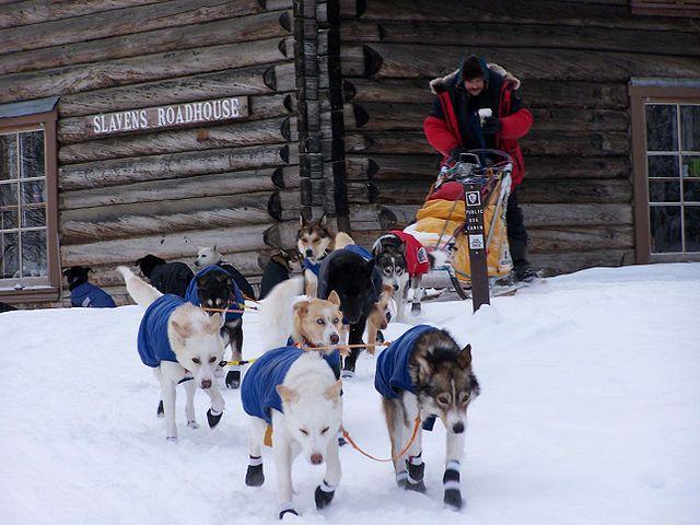 dog sled - Alaska