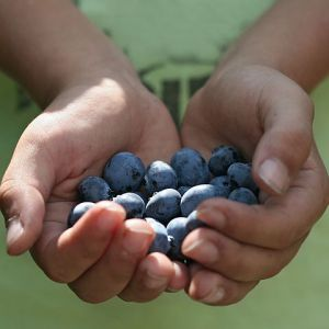 Blueberries - two handfuls
