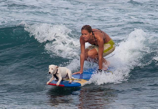 Dog Boarding Maui Hawaii