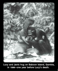 Lucy the chimpanzee and Janis Carter hugging2