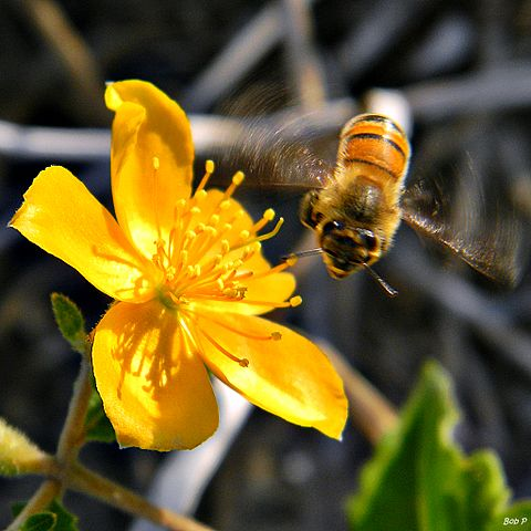 Bee - Honey Bee Happy Dance