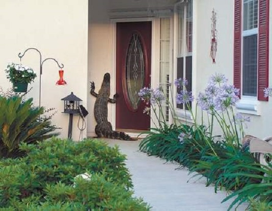 alligator - knocks at door - Island Packet - 2006