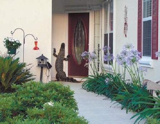 alligator - knocks at door - Island Packet - 2006