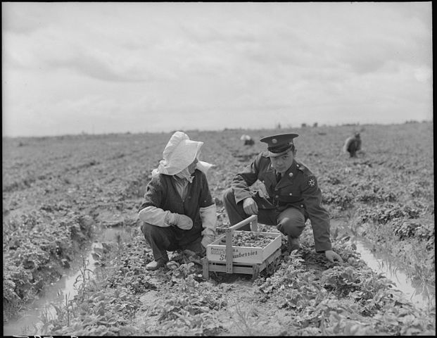 A soldier and his mother in a strawberry field in Florin,_Sacramento_County,_California.