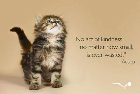 Kindness - kitten and quote - No act of kindness no matter how small is ever wasted
