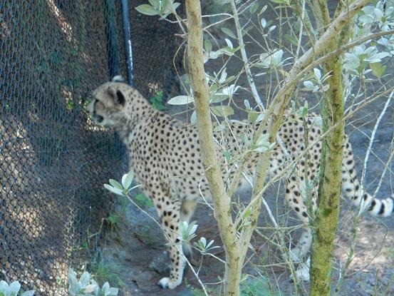 Brevard Zoo -12-12-15 (15)