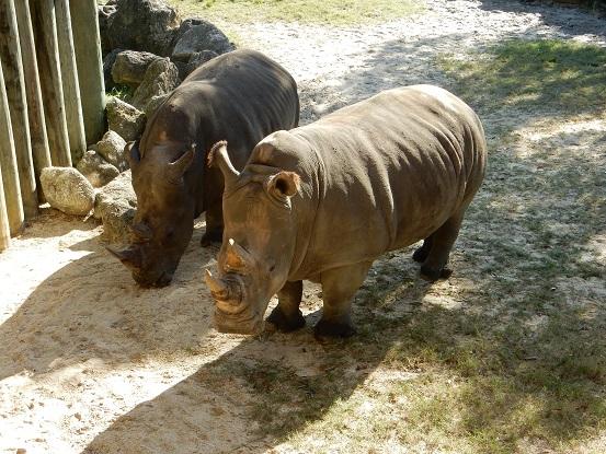 Brevard Zoo -12-12-15 (19)