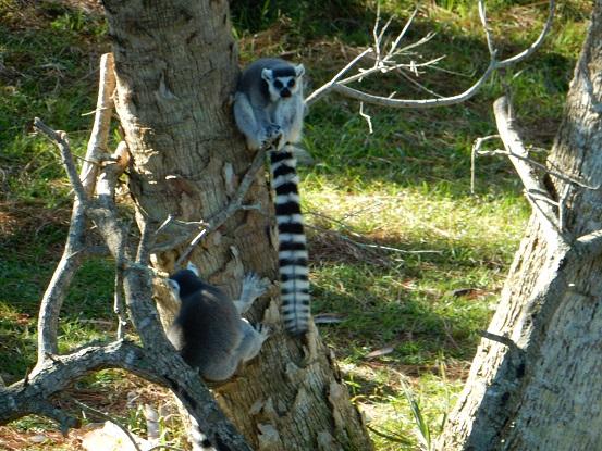 Brevard Zoo -12-12-15 (28)
