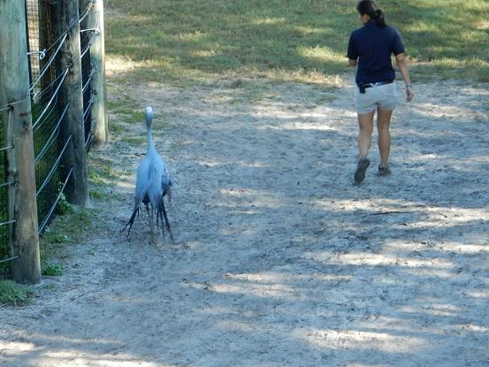Brevard Zoo -12-12-15 (31)