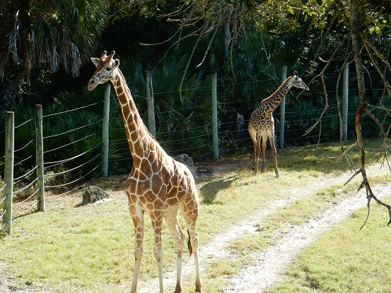 Brevard Zoo -12-12-15 (40)